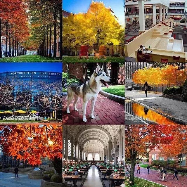 美国东北大学